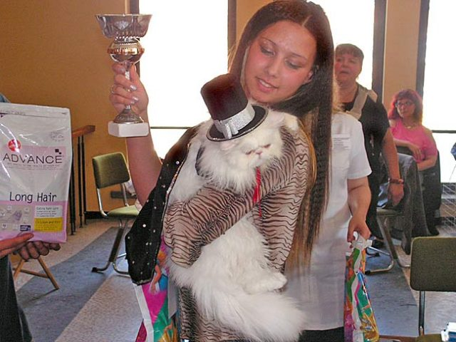 5-th National cat carnival – review and cat show