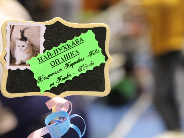 18-th National Carnival, cat show, beauty contest of cats and other small pets